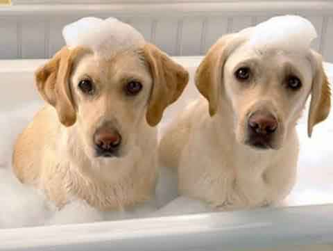 给狗狗洗澡多久洗一次比较好