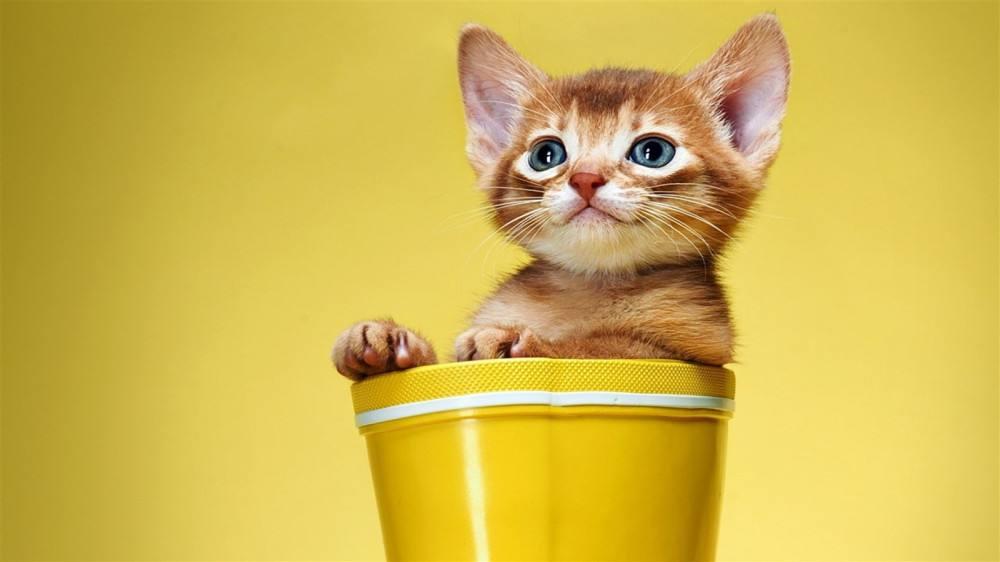 宠物耳螨是什么样的,有什么办法能治好,怎么防治好