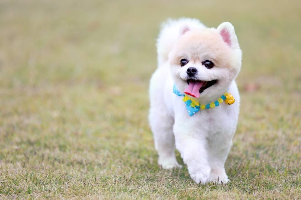 狗狗老了该怎么照顾,老龄狗狗的特殊护理六步骤