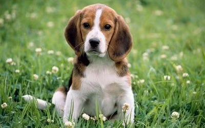 春季狗狗容易引发哪些疾病呢?